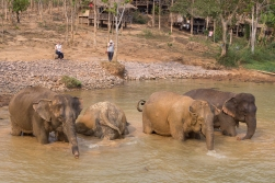 Elephants need cooling down in the heat, and bathing is a twice a day routine.