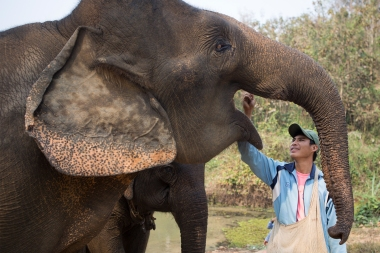 Being a mahout is a very specialized occupation, you need to be good at it when your job is controlling three tons of potentially dangerous flesh and bone. But when they are handled right, these giants turn out to be peaceful and nice to be around.