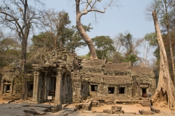 Ta Phrom is characterized by large trees embracing the buildings and the walls. They were left there by the archaeologists who did the restoration in order to preserve the image of how the buildings once were taken over by the jungle.