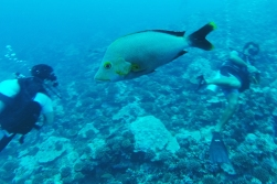 For the fish, us divers do not exist unless we can be identified as an enemy or a source of food.