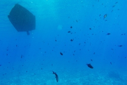 The silhouette of our dive boat with a school of fish.