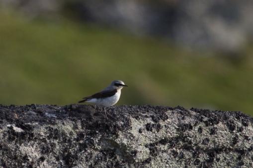 The local wildlife (ES' favourite bird picture).