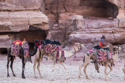 If you want a ride, there is always a camel or a mule around. If you say no, their owners do not insist. We found all local traders at Petra friendly.