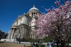 Back to London. Spring is blooming in front of the St Paul's Cathedral.