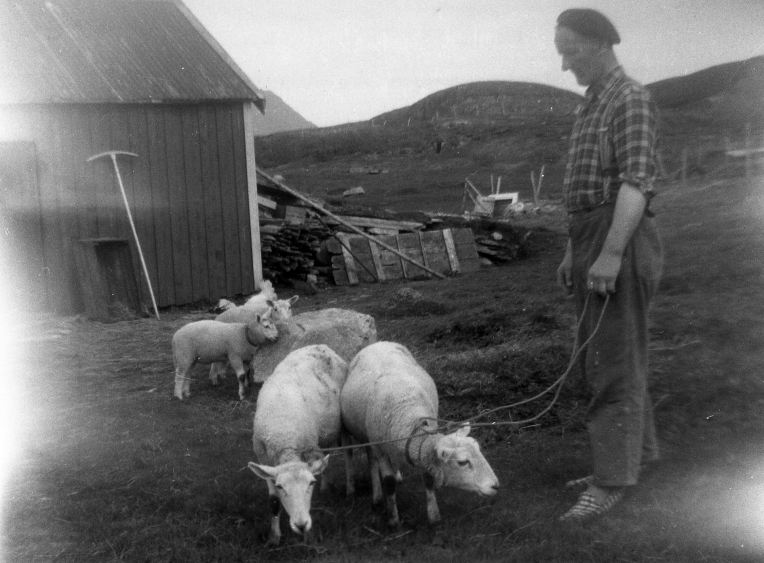 Grandfather still had sheep. Today we have only mechanical lawn mowers.
