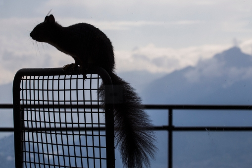 One of our best friends is the squirrel Chip, who was also a frequent visitor last year. Squirrels are loners, so when Dale came around on occasion, he was immediately chased away!
