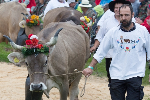 The Schwingen is a big folklore event, celebrating the Swiss mountain farming culture.