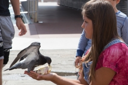 The pigeons around San Marco are famous. This family of Russian animal lovers not only fed them, the girl and the bird took turns eating from the same piece of bread!