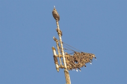 The vane at the top of the stupa is made of gold and precious stone and weighs more than 450 kilos