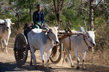 8_47_80116_Myanmar_2020