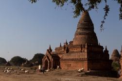 8_53_80188_Myanmar_2020