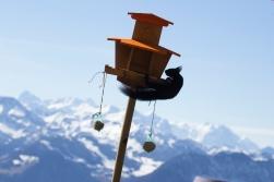 A flying squirrel stealing bird food!
